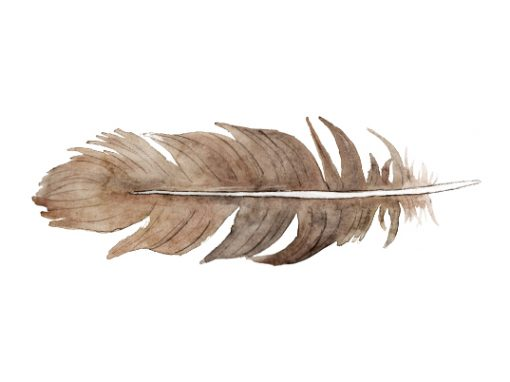 Feather illustration for Feather River Bluffs logo